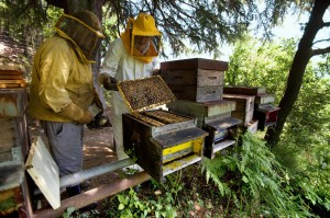 Beekeeping. Bees. Honeycomb. Forest